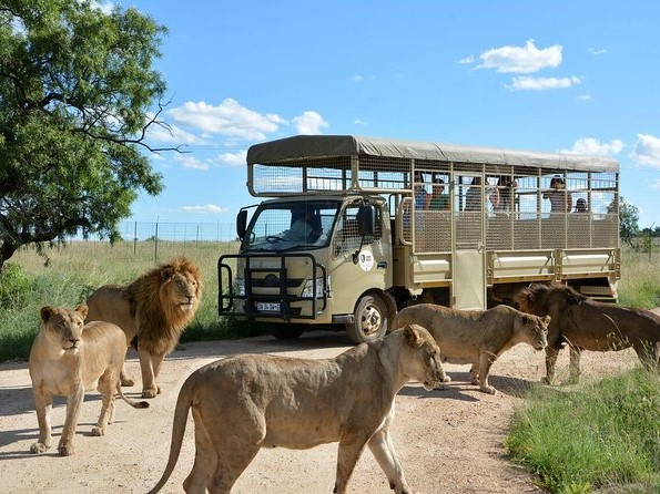 lion park2