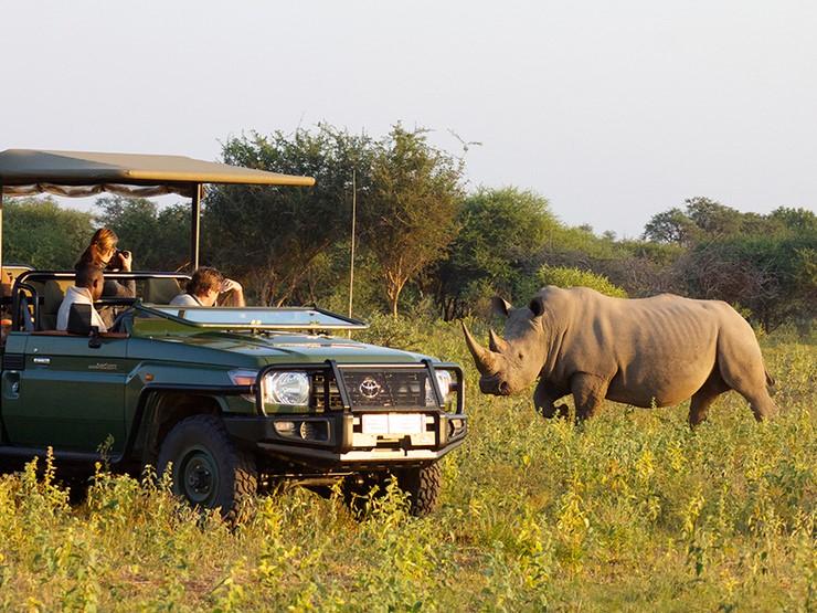 safari___SA2